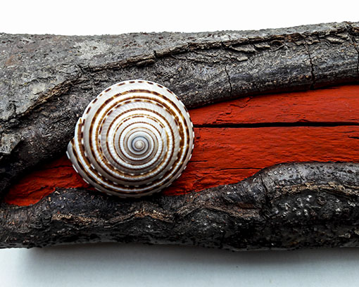Small wood object with shell and colour